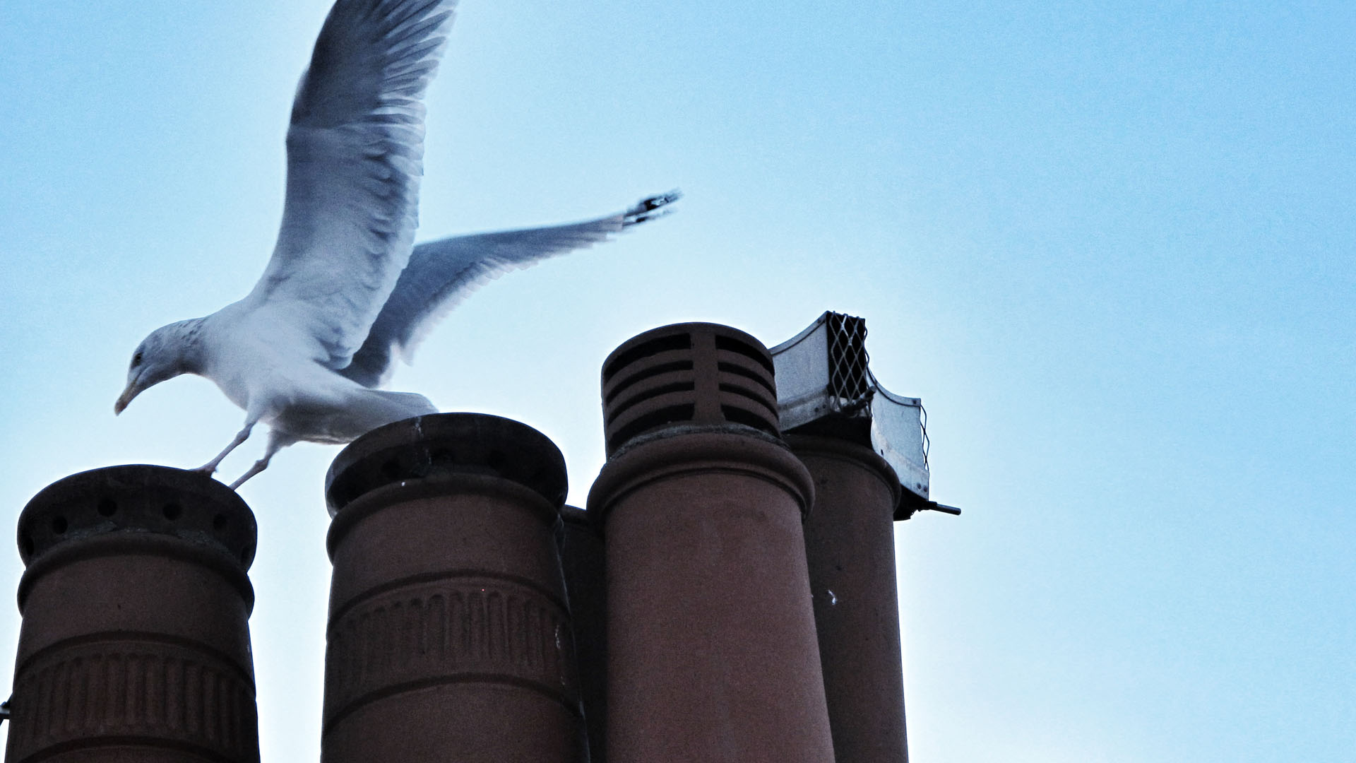 cairnfield_chimney_gull