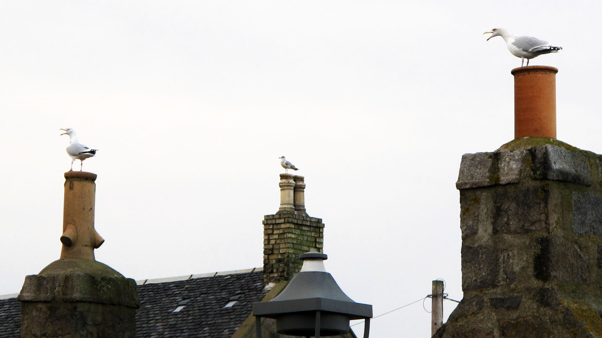 fittie gull chimney sentries