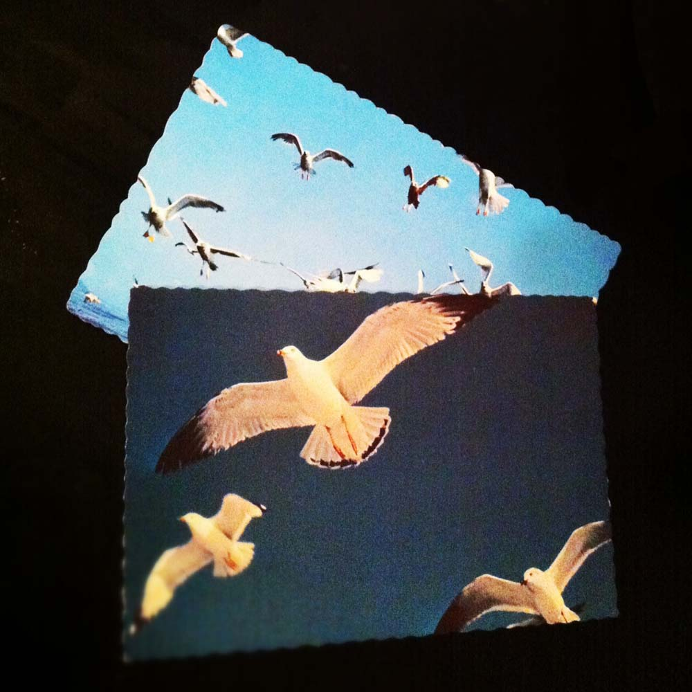 Gull Postcards