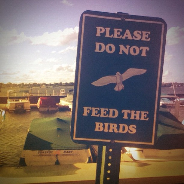 Do not feed birds sign