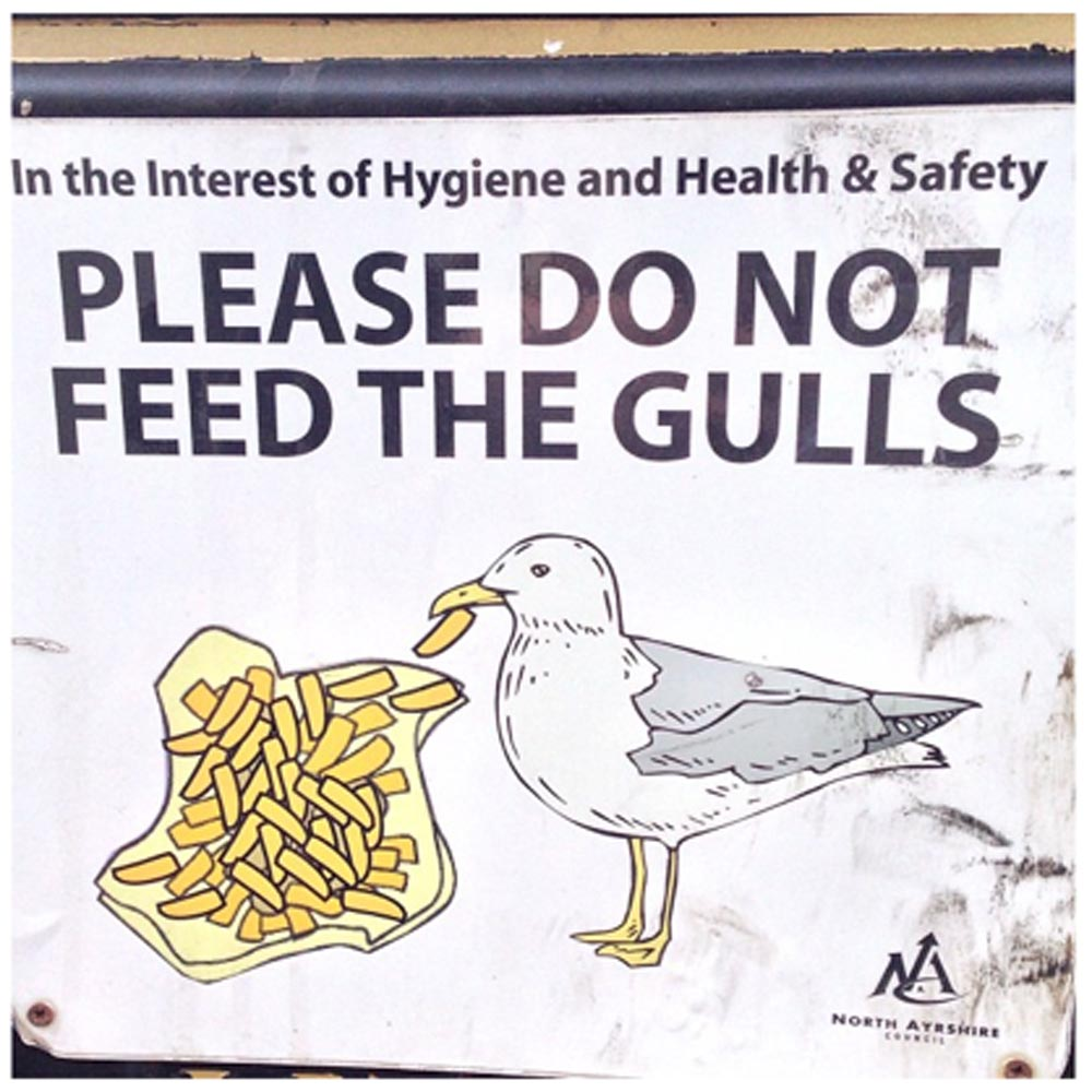 Please do not feed the gulls
