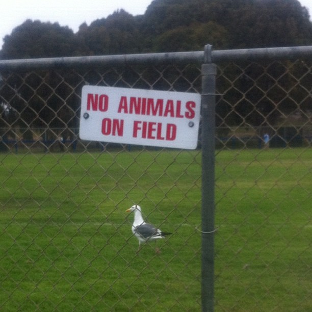 Gull defys no animals sign